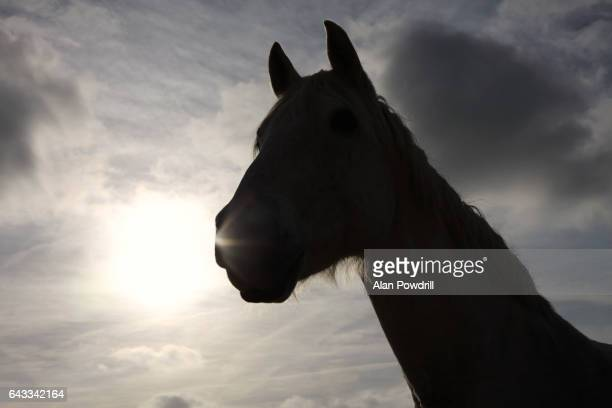 Horse Head Silhouette, Sun Behind