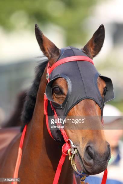 Testa di cavallo con Paraocchi