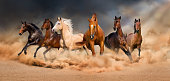 Horse herd run in desert sand storm
