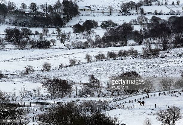 A horse in a field after heavy snow fall near Londonderry in Northern Ireland on January 14 2015 More than 100 schools and nurseries have been shut...