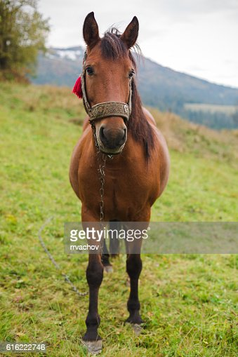 Horse in a pasture in the mountains : Stock Photo