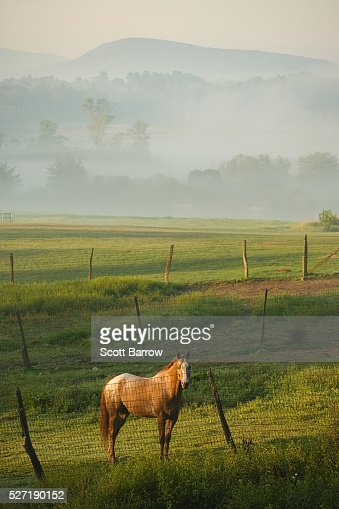 Horse in a pasture : Stock Photo