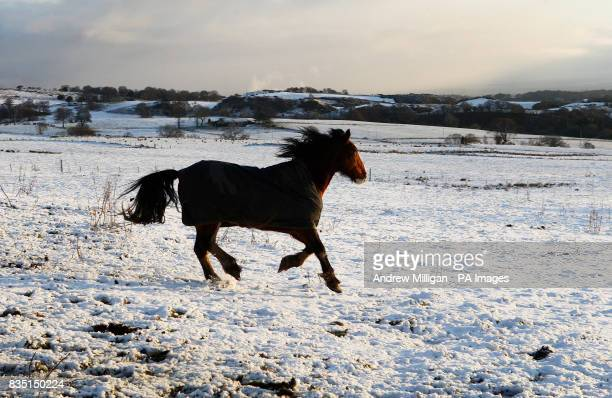 A horse in a snow covered field in Denny Scotland as northern Britain today bore the brunt of wintry weather that could bring almost a foot of snow...