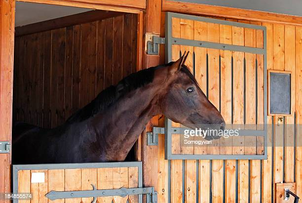 A horse in a stable with the door open