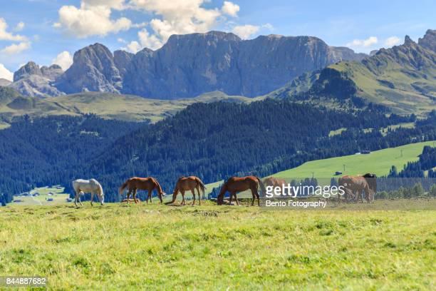 Horse in Dolomite, Italy