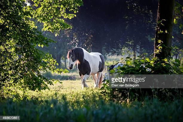 Horse in evening sunlight