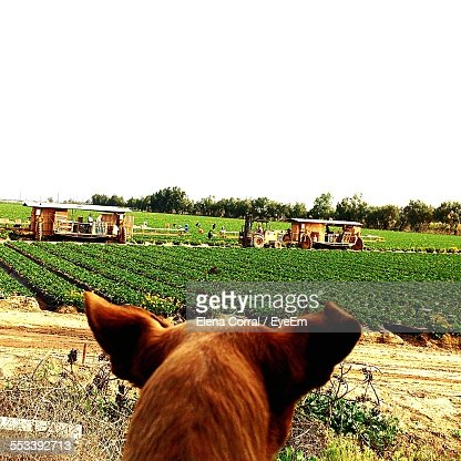 Horse In Field With Built Structures