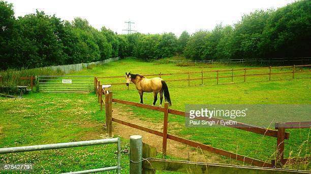 Horse In Pen On Grassy Field