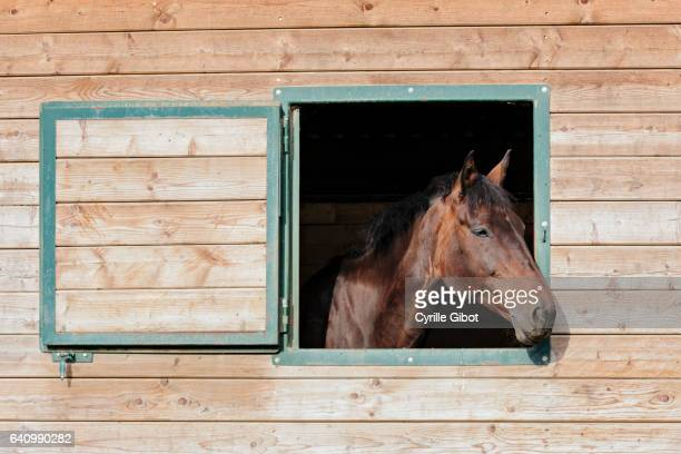 Horse in stable, Aveyron, France