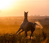 Horse in sunset