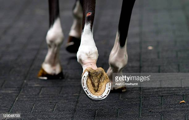 A horse in the pre parade ring at Goodwood racecourse on August 30 2011 in Chichester England