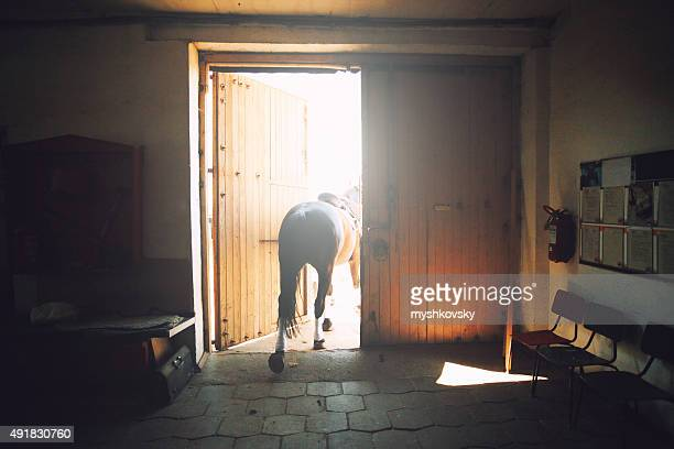Horse in the stabling
