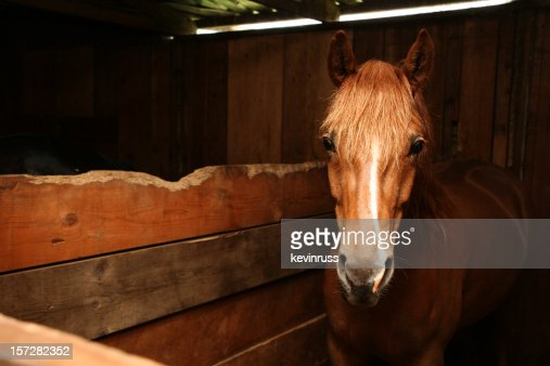 Horse in Wooden Stable : Stock Photo