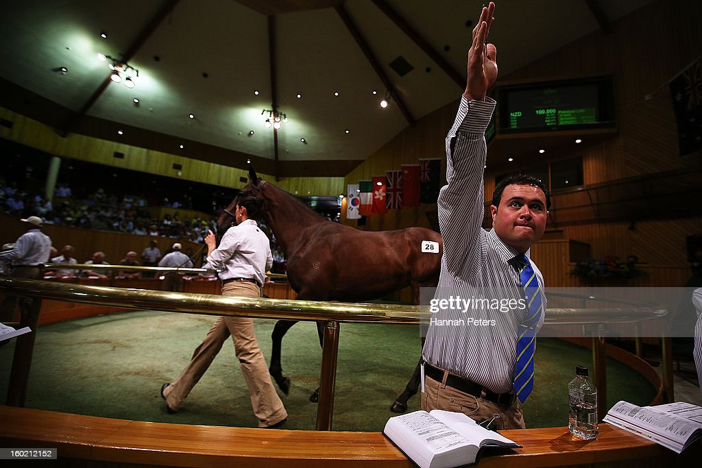 A horse is auctioned at the New Zealand Bloodstock 87th National Yearling Sales at Karaka on January 28, 2013 in Auckland, New Zealand.