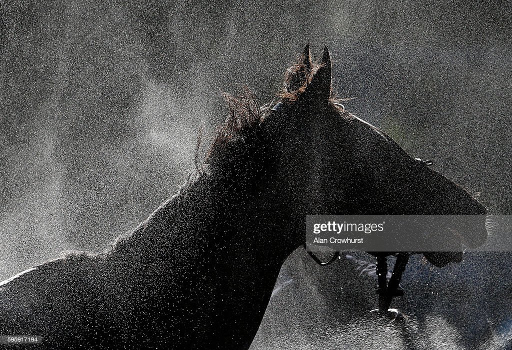 A horse is hosed down after racing on a warm evening at Goodwood on August 26 2016 in Chichester England