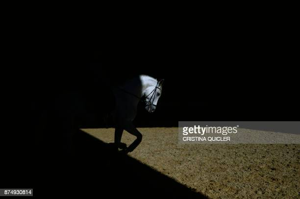TOPSHOT A horse is pictured before an exhibition at the Sicab 2017 International Horse fair in Sevilla on November 16 2017 / AFP PHOTO / CRISTINA...