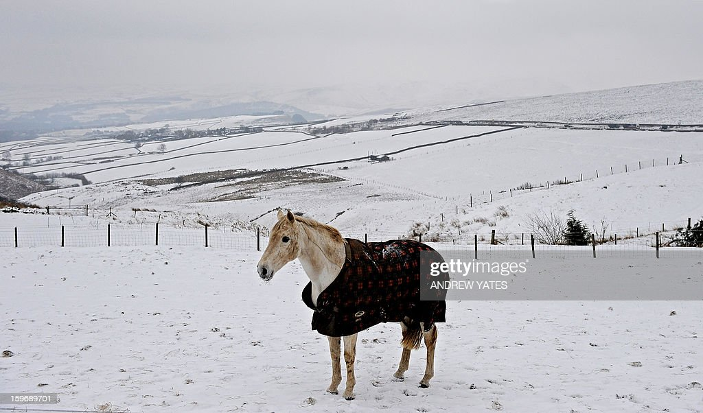 A horse is pictured in a snow covered field on the hills above Hayfield in the Peak district, northern England, on January 18, 2013. Snow swept across Britain on Friday, forcing airports to cancel dozens of flights and more than 2,000 schools to close.