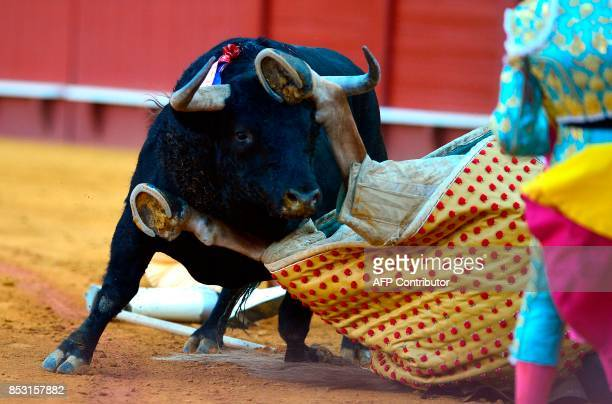 A horse is pushed down by a bull during a bullfight at the Maestranza bullring in Sevilla on September 24 2017 / AFP PHOTO / CRISTINA QUICLER