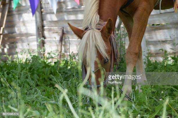 A horse is seen at Cheerful Village in Ankara Turkey on June 27 2017 Mostly families and children visit the village to enjoy the holiday on the last...