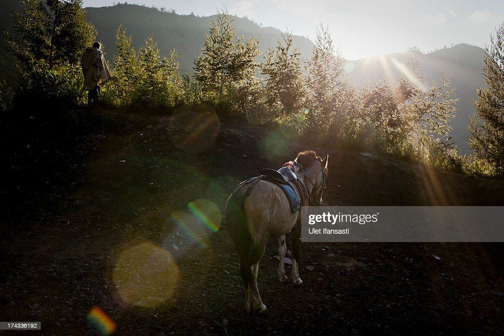 A horse is seen at the Bromo Tengger Semeru National Park, the location of the Tenggerese villages where the Tenggerese Hindu Yadnya Kasada Festival is held, on July 23, 2013 in Probolinggo, Indonesia. The festival is the main festival of the Tenggerese people and lasts about a month. On the fourteenth day, the Tenggerese make the journey to Mount Bromo to make offerings of rice, fruits, vegetables, flowers and livestock to the mountain gods by throwing them into the volcano's caldera. The origin of the festival lies in the 15th century when a princess named Roro Anteng started the principality of Tengger with her husband Joko Seger, and the childless couple asked the mountain Gods for help in bearing children. The legend says the Gods granted them 24 children but on the provision that the 25th must be tossed into the volcano in sacrifice. The 25th child, Kesuma, was finally sacrificed in this way after initial refusal, and the tradition of throwing sacrifices into the caldera to appease the mountain Gods continues today.