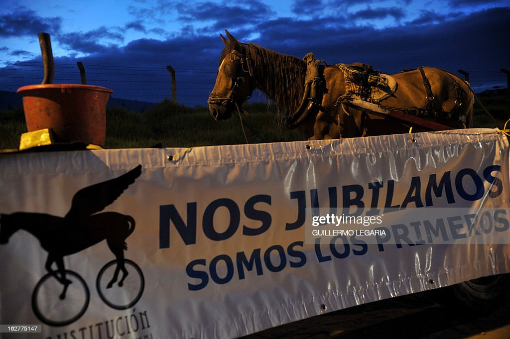 A horse is seen next to a sign reading 'We retire. We are the first', on February 26, 2013, in Bogota, Colombia, during a caravan of 50 recyclers, pickers and loaders, on horse-drawn carts, who will deliver their horses to the University of Applied Sciences and Environment (UDCA), where they will receive veterinarian care and will wait to be adopted, as part of a process to replace their carts by motor vehicles. The replacement was an initiative of the Mayor of Bogota, the Mobility Secretariat, and Animal Rights associations. AFP PHOTO/Guillermo Legaria