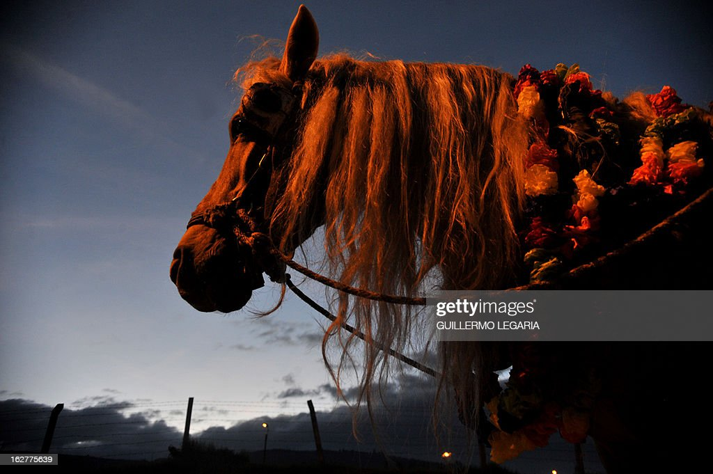A horse is seen on February 26, 2013, in Bogota, Colombia, during a caravan of 50 recyclers, pickers and loaders, on horse-drawn carts, who will deliver their horses to the University of Applied Sciences and Environment (UDCA), where they will receive veterinarian care and will wait to be adopted, as part of a process to replace their carts by motor vehicles. The replacement was an initiative of the Mayor of Bogota, the Mobility Secretariat, and Animal Rights associations. AFP PHOTO/Guillermo Legaria