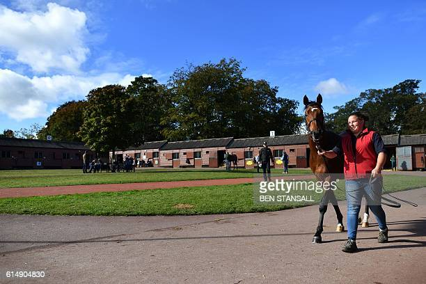 A horse is walked to the parade ring before entering the auction ring at the Tattersalls Bloodstock Auction in Newmarket north of London on October...