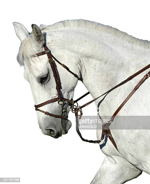Horse isolated on White