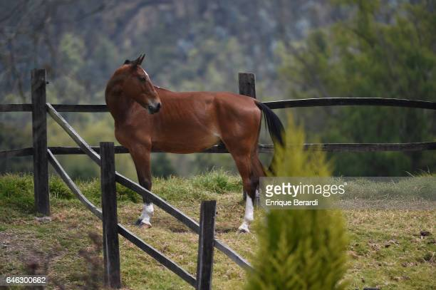 A horse just outside the course during the final round of the PGA TOUR Latinoamerica 70 Avianca Colombia Open at Club Campestre Guaymaral on February...