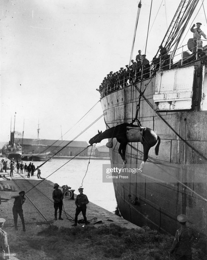 British troops landing horses from a ship at Salonika to move to the Balkan battle front.