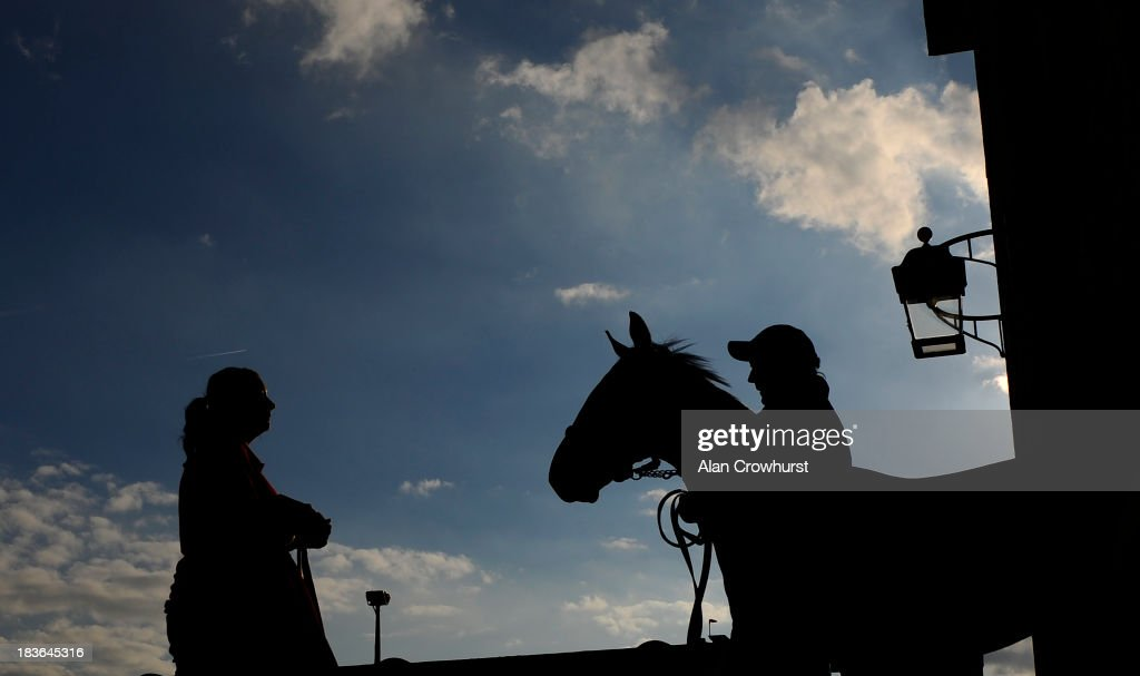 A horse leave the sales ring at Tattersalls yearling sales on October 08, 2013 in Newmarket, England.