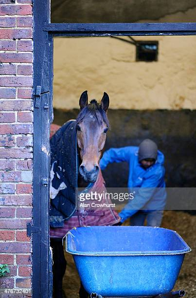 A horse look out from its box as it's mucked out at Nick Gifford's Downs Stables on March 04 2014 in Findon England