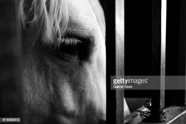 A horse looks inside a stable during the 131st Annual Rural Exhibition at La Rural on July 19 2017 in Buenos Aires Argentina