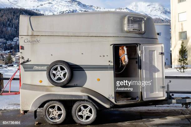 A horse looks out the door of his horsebox on the frozen lake of St Moritz on February 11 2017 in St Moritz Switzerland 'White Turf' is a series of...