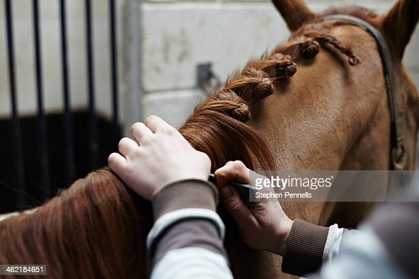 Horse mane being plaited by stable hand