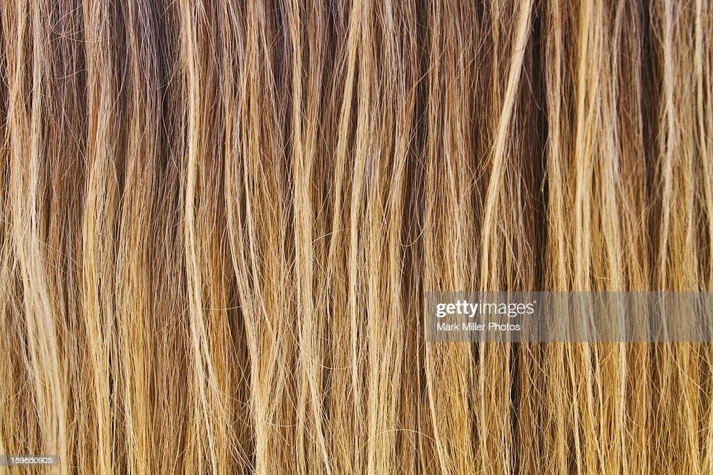 Horse Mane Hair : Stock Photo