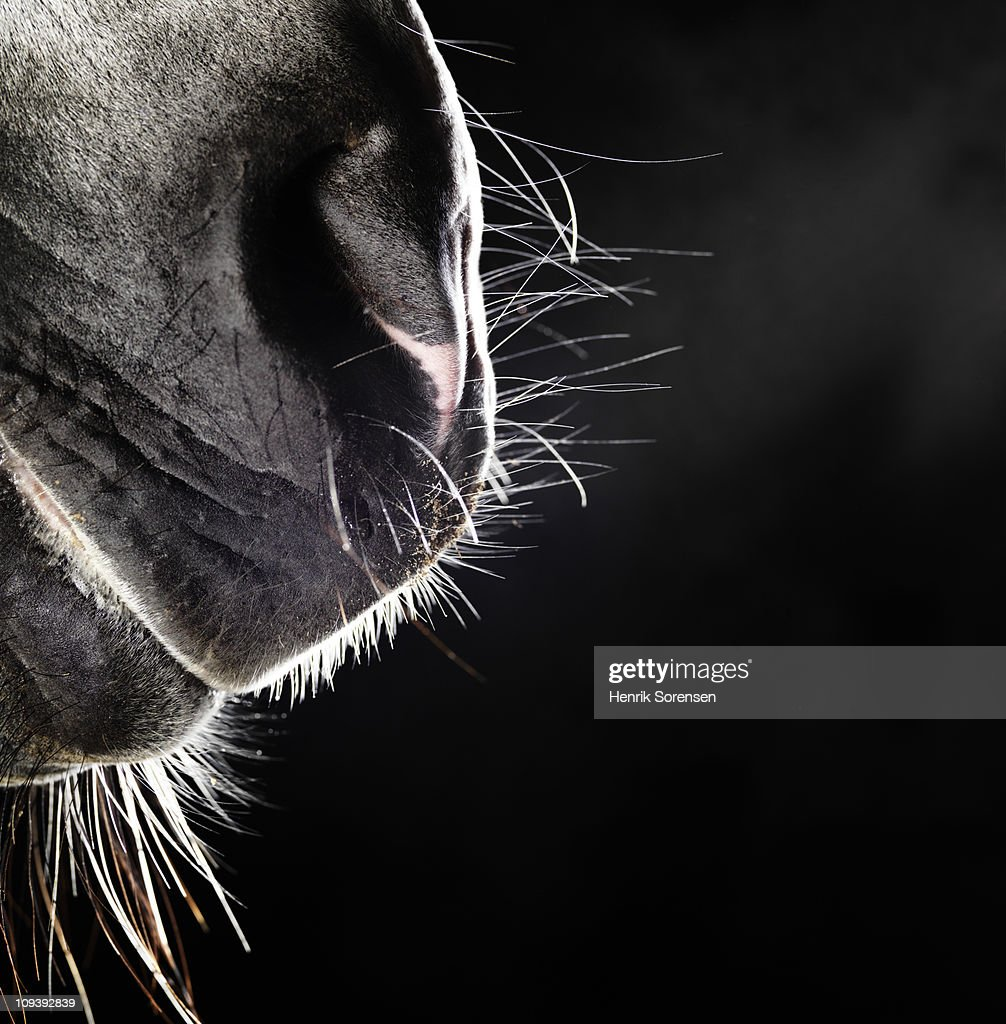 Horse nose and mouth : Stock Photo