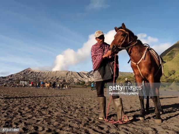 Horse of Bromo