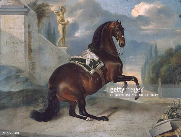 Horse of Imperial Stables 18th century painting from Room of horses Schoenbrunn castle Vienna Austria Austria 18th century