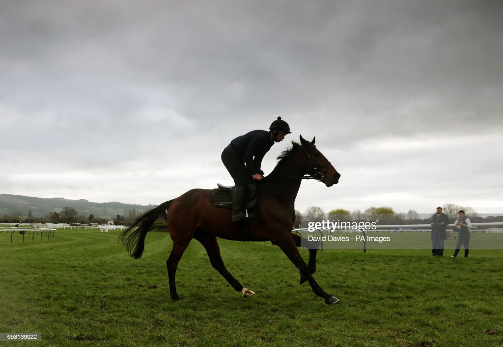 A horse of trainer Willie Mullins on the gallops during Champion Day of the 2017 Cheltenham Festival at Cheltenham Racecourse.