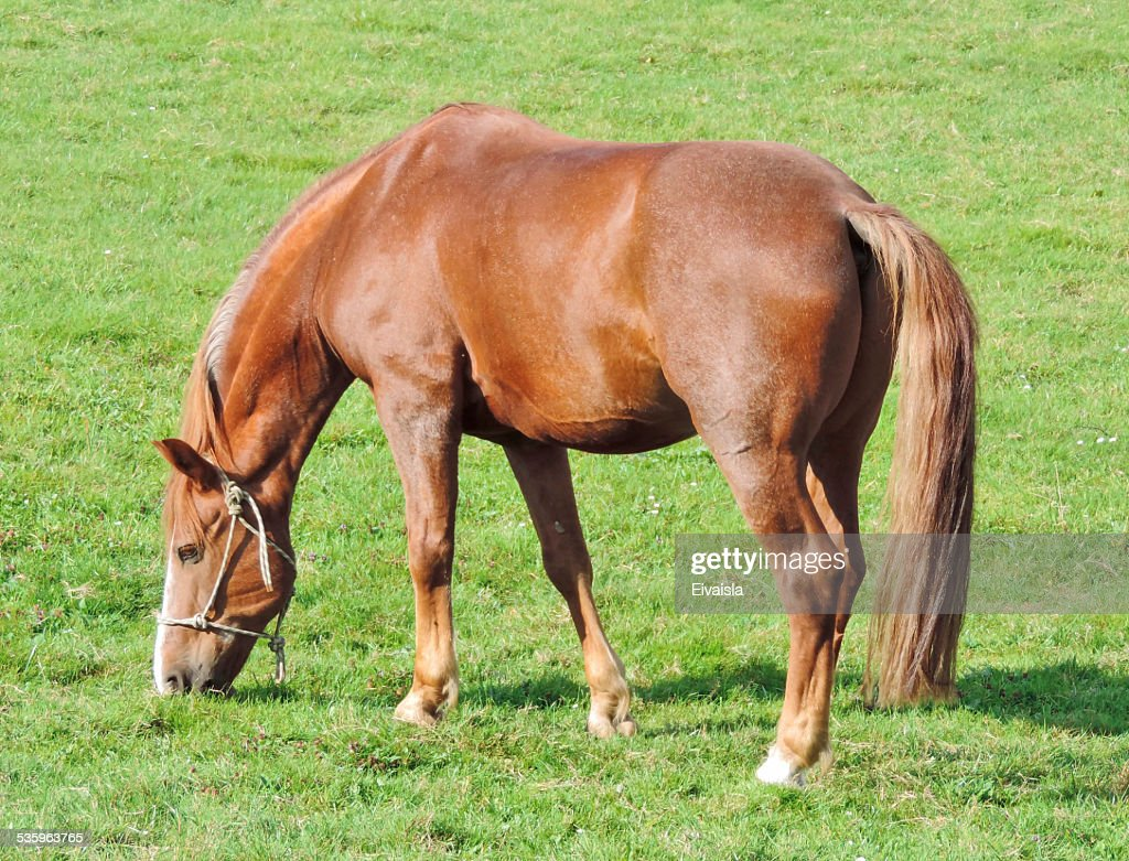 horse on a pasture : Stock Photo