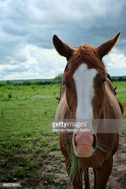 Horse On Grassy Field