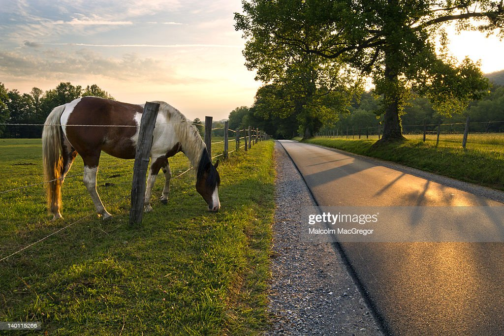 Horse on rural road