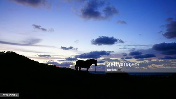 A horse on the hill