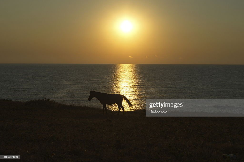 Horse on the sunshine : Stock Photo