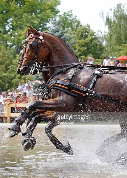 Horse Paar im Wasser field