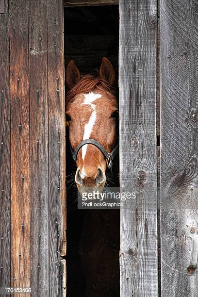 Horse peeking out of the barn door
