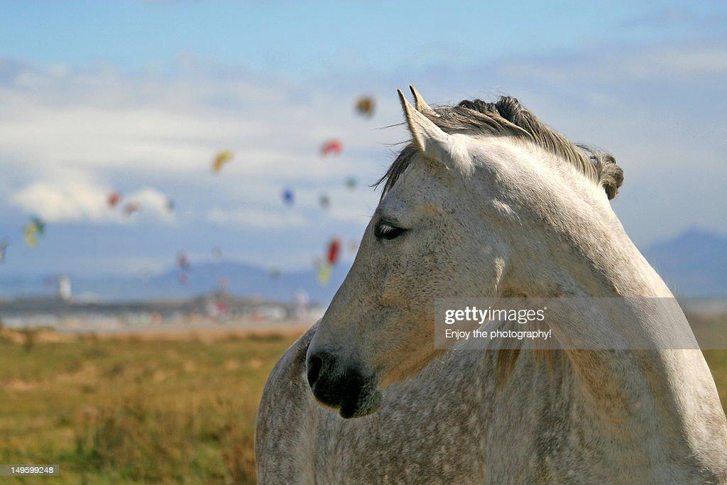 Horse : Stock Photo