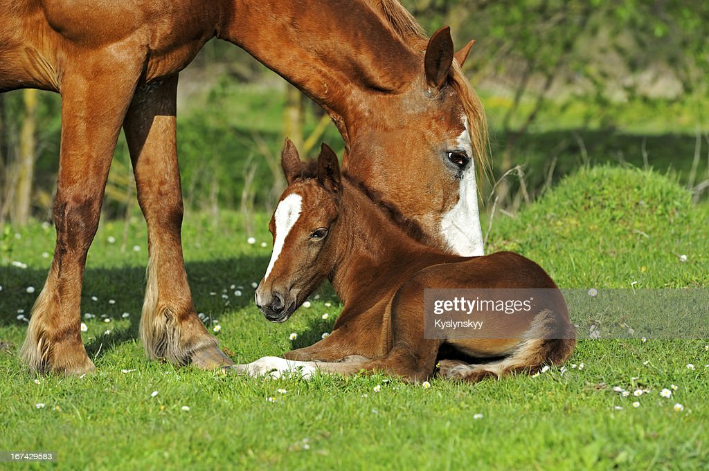 Cavalo : Foto de stock