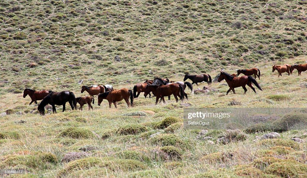 Horse : Stock-Foto